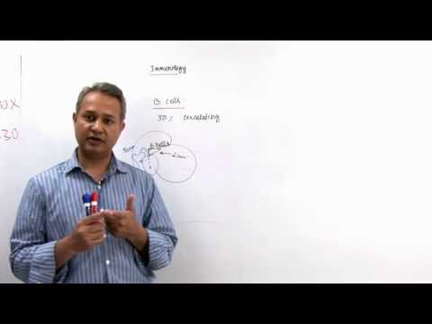 Immunology Lecture 11 Part 1 B cells