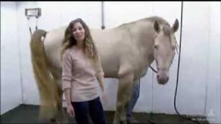 Les chevaux de Cavalia soignés au CHUV