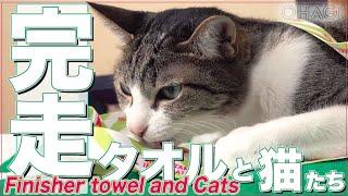 完走タオルと猫たち thumbnail