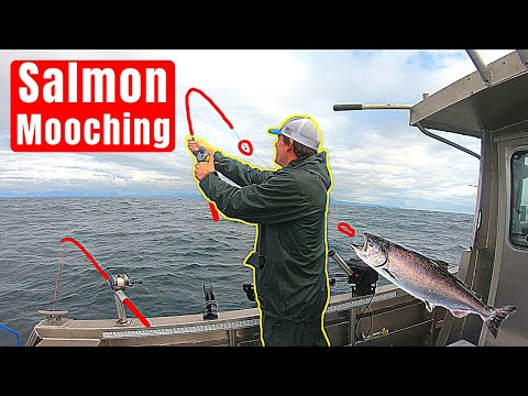 How To Mooch For Salmon (Salmon Mooching)