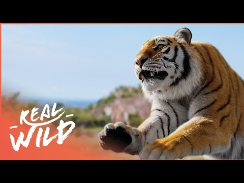 Animal Attack: Everyone's Worst Nightmare! | Human Prey | Real Wild Documentary