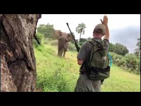 Safari guide stopping a charging elephant with his hand