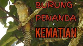 Download BUKAN GAGAK! INILAH BURUNG PENANDA KEMATIAN.