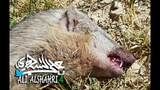 تعرف على هذا الحيوان الغريب الذي دهسته إحدى السيارات !! #Mongoose