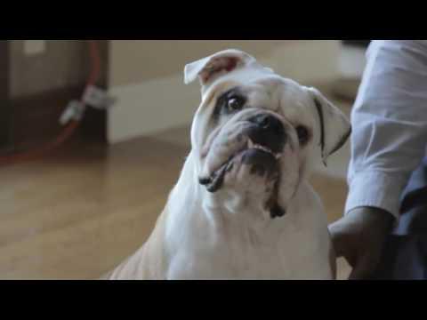 Pet LoveLy   Glenn Dorsey for PETA