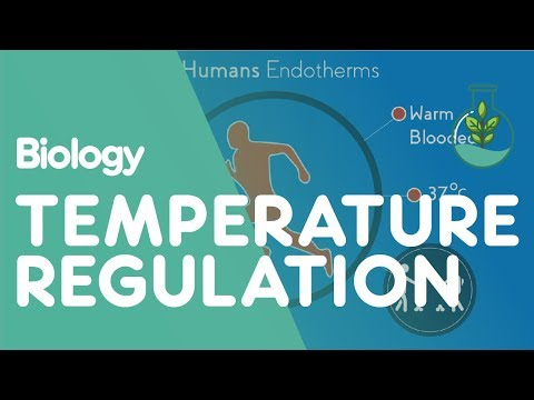 Temperature Regulation of the Human Body | Biology for All | FuseSchool