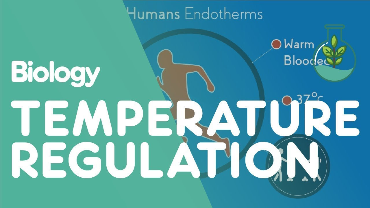 temperature regulation of the human body | biology for all