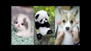 Cute baby animals Videos Compilation cute moment of the animals - Soo Cute! #7 ♥‿♥ Love