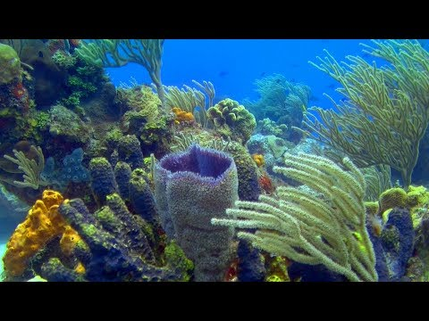 Cozumel-Sunscape | Cozumel Diving In A Coral Wonderland (4K) - An Underwater 3D Channel Film