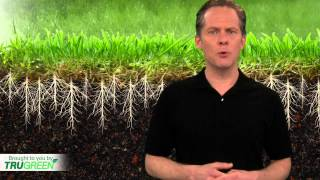 Lawn Aeration | Core Aeration | TruGreen
