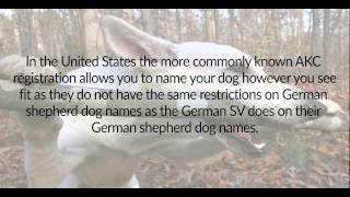 German Shepherd Dog Names