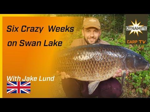 Carp Fishing On Yateley - Six Crazy Weeks On Swan Lake