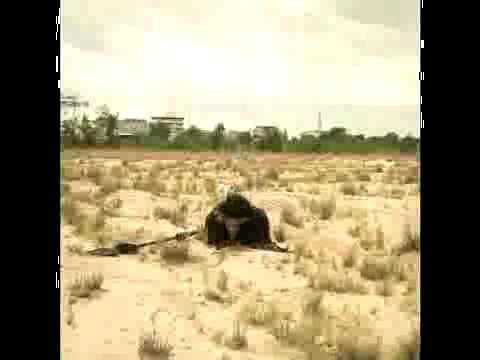 Tây du kí 2011