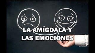 Download La amígdala y las emociones