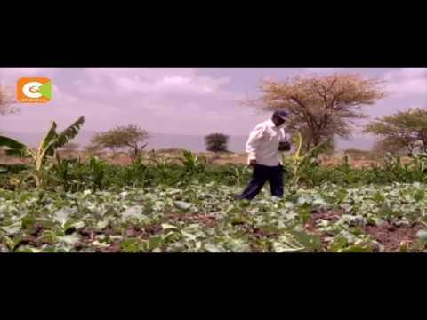 Yatta residents defy drought through irrigation