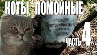 Коты помойные 4. Неожиданная находка.