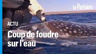 Australie : l'incroyable rencontre entre une chienne et un requin-baleine