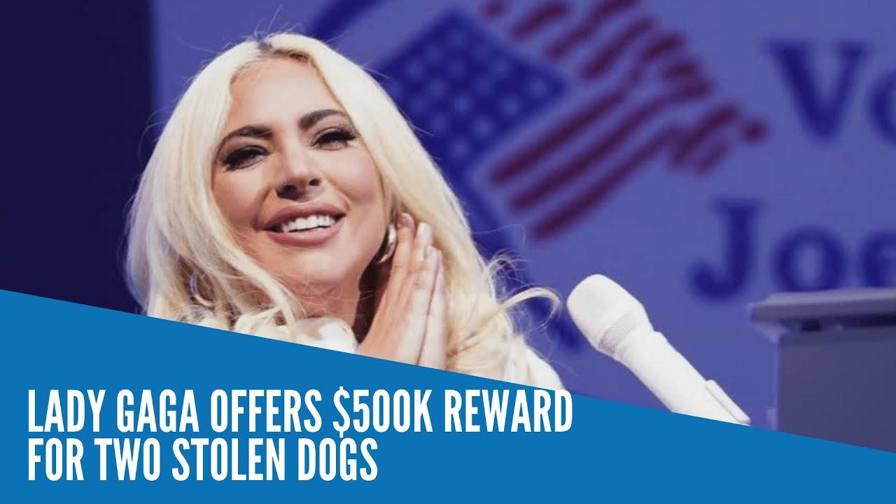 Lady Gaga's dog walker shot in Hollywood; $500K reward for 2 ...