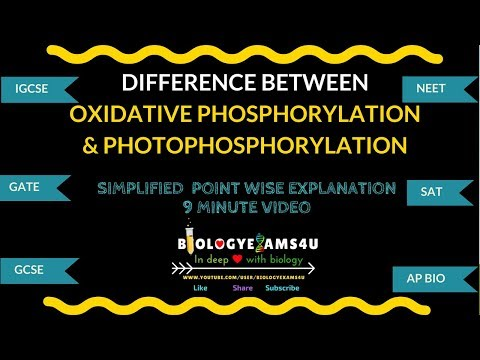 Difference Between Oxidative Phosphorylation And