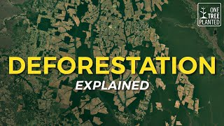 What is Deforestation? | One Tree Planted