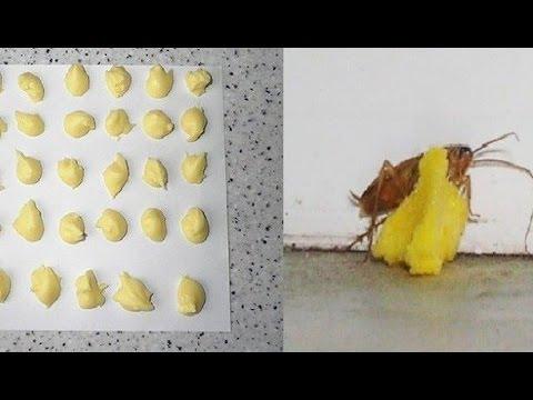 How To Kill Ants Using My Homemade Boric Acid Recipe