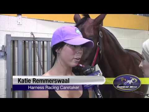 Behind The Scenes Harness Racing Caretaker - YouTube