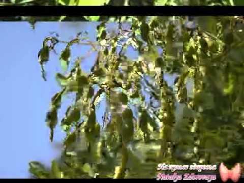 Лекарственные растения Софора Японская (плоды) - отзывы