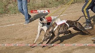 samrala derby (dog racing) 2013-14 part 5 by punjabLive1.com
