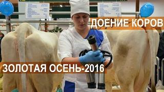 Две техники машинного доения коров. Выставка Золотая Осень-2016