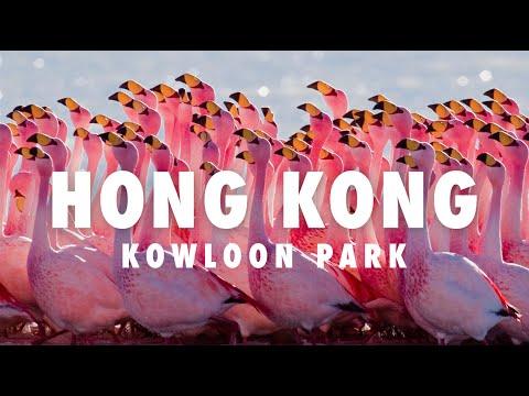 Made in Hong Kong cap.16 ► Kowloon Park