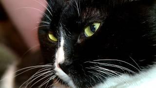Возвращение блудного кота / Новости