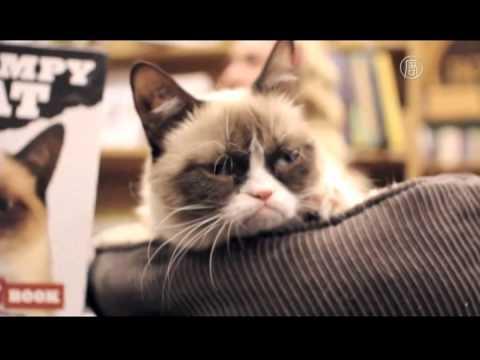 不爽貓又出書了! 淡定慵懶表情依舊迷人【大千世界】Grumpy Cat|臭臉貓|脾氣暴躁貓|粉絲見面會│暢銷作家 ...