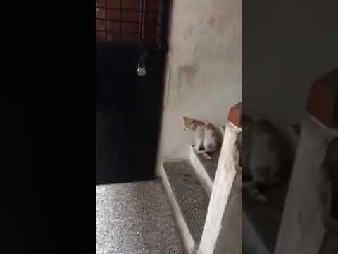 Must see | Funny cat knocking door
