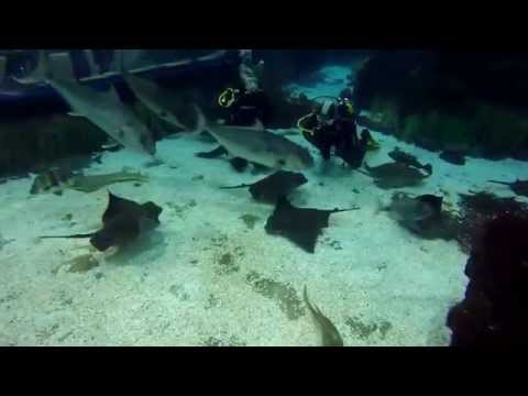 Diving With Sharks Barcelona Aquarium 2015