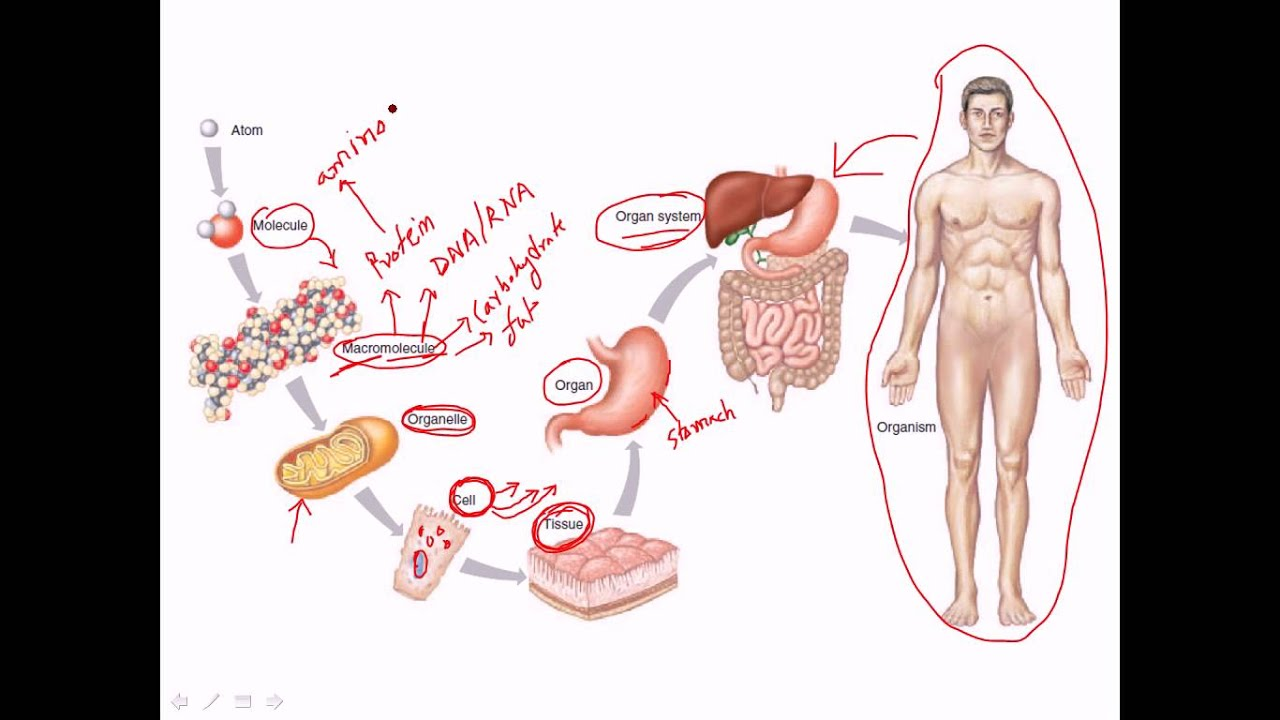 an overview on cell communication trough physiology in the human body In the human body an overview of the endocrine system cleft to elicit a response in the neighboring cell this method of communication is nearly.