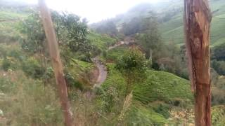 BEAUTIFUL TEA PLANTATION.MUNNAR.IDUKKI DISTRICT.KERALA