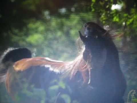 Apache *Musique Des  Serpent Noir*