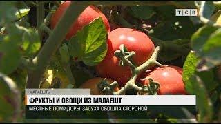 Фрукты и овощи из Малаешт