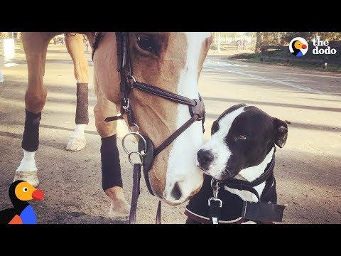 Dog Thinks He's Actually A Horse | The Dodo Odd Couples