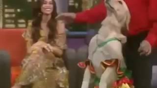 Собака и китаец танцуют