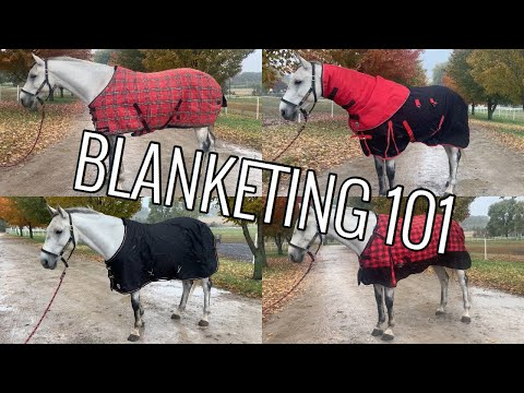 All About Horse Blanketing