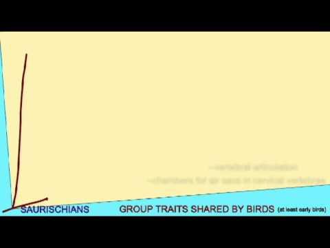 BIRD EVOLUTION: CLADOGRAM: THEROPODS