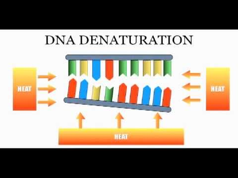 DNA Sequencing: The Chain Termination Method (Sanger Method)