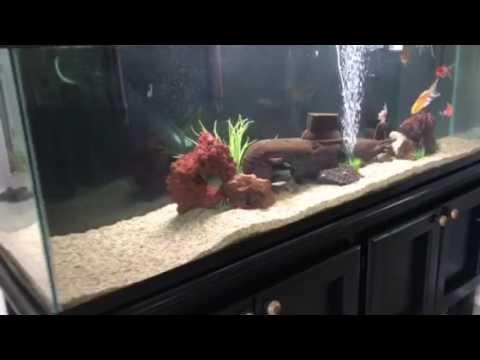 Submarine Fish Tank