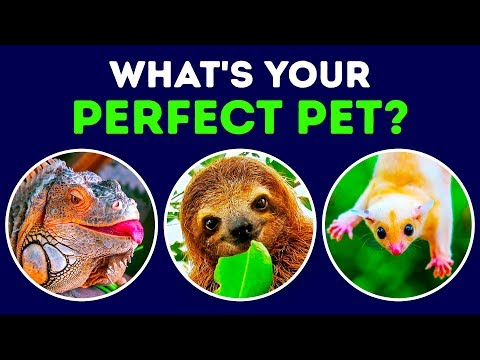 What Kind Of Pet Matches Your Personality