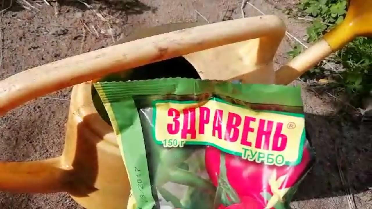 Профилактическая обработка огурцов зеленкой