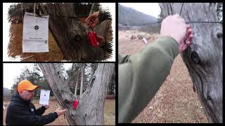 GAMO Tree Spider Target System