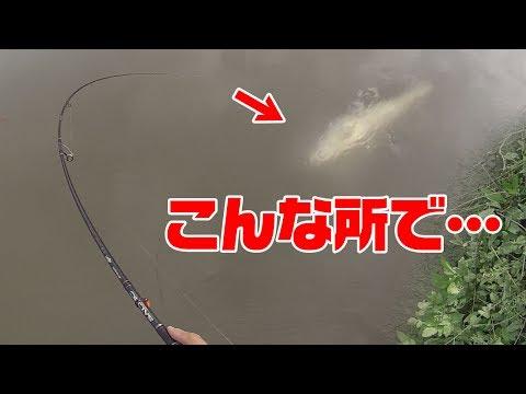 町の真ん中で海の魚が釣れた‼
