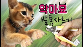 악마묘 발톱자르기!! 후덜덜..한성깔하는 아비시니안 호야의 발톱을 깍아라!고양이 남매 꿀잼 동물스토리 어린이채널♡모모TV/모모토이즈