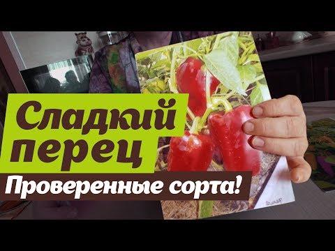 Какой сладкий перец посадить.   Проверено на Урале | толстостенны | урожайные | секретов | светлана | посадить | налетова | сладкий | огород | сорта | самые